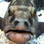 ブサカワ魚